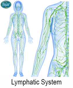 LymphoCare Lymphatic System Depiction